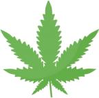 cannabisheaderyyg
